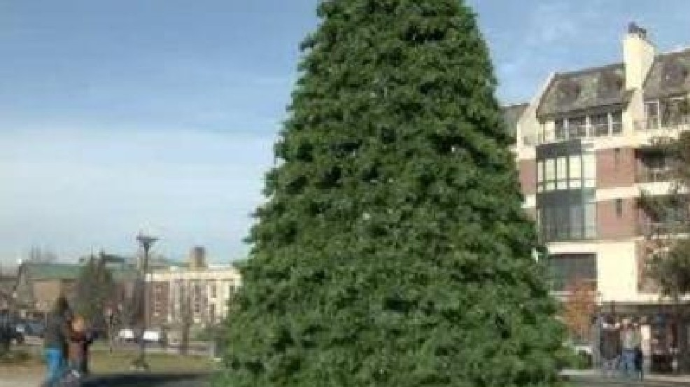 Does it matter if you buy a real or fake Christmas tree?